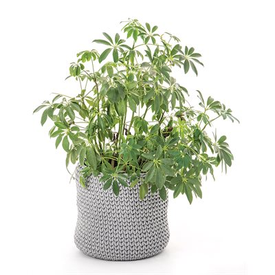 Capucine grey knitted plant pots